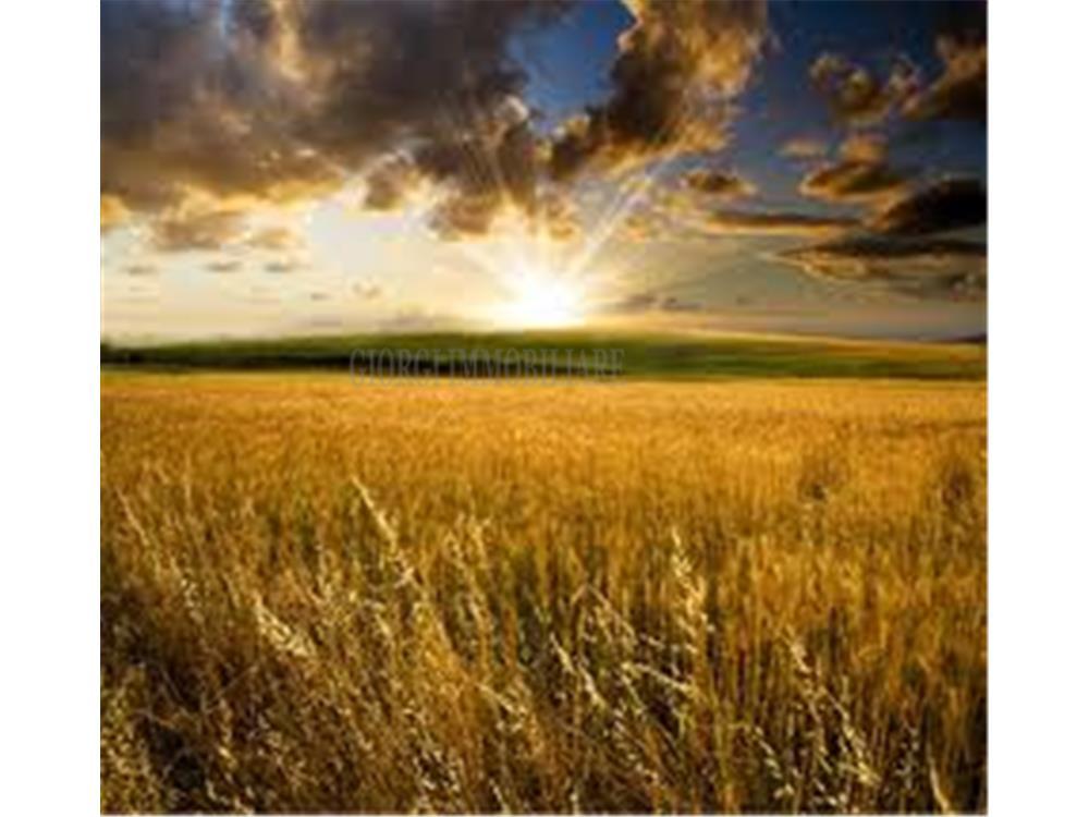 Massa Vendita Terreno Commerciale Ronchi rif: 462